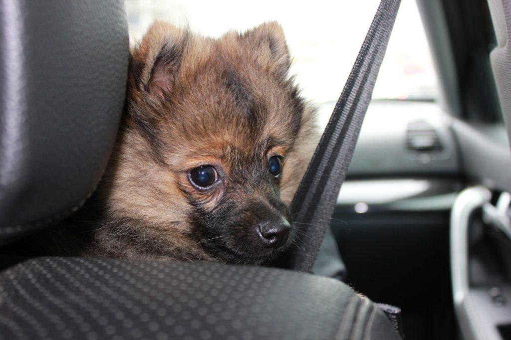 Ladungssicherungspflicht für Tiere